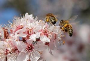 contrat de pollinisation