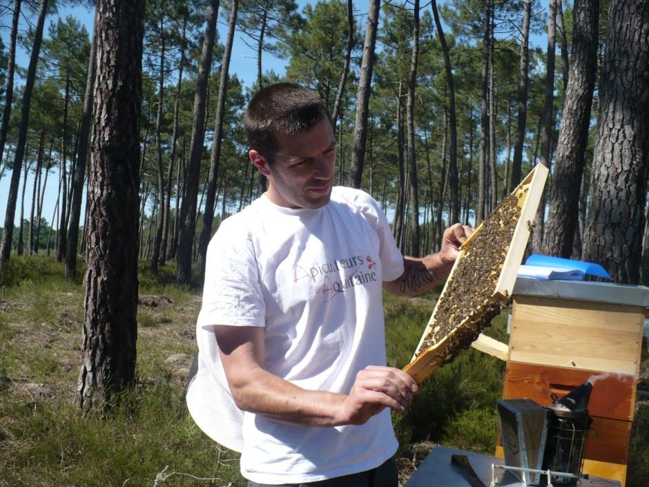 apiculteur professionnel