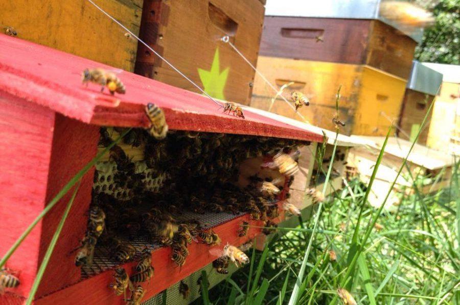 trappes à pollen