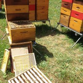 miel biologique
