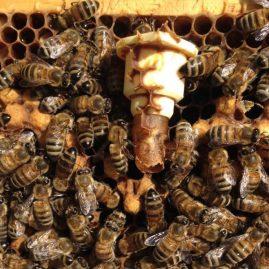 miel bio gironde