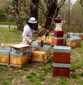 producteurs miels bio