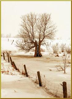 split_tree