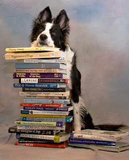 well_read_border_collie