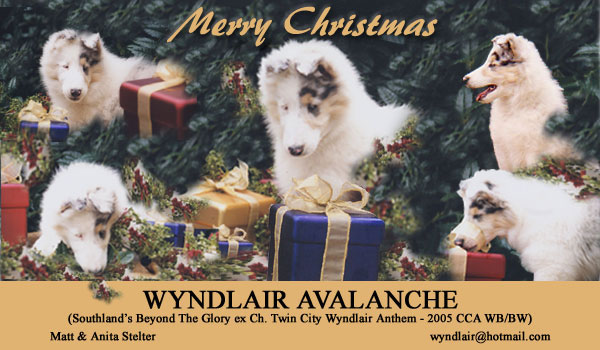 f4d5e9220d Double Merle Breeders  In Their Own Words 1