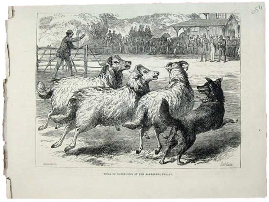 1876 Sheep Dog Trials at Alexandra Palace.