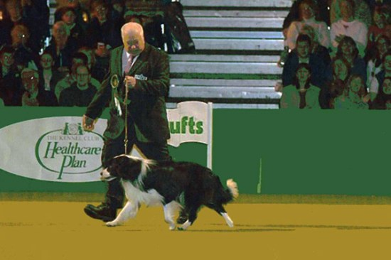 Rosehurst Dirty Den, the last outcrossed Crufts Border Collie BOB