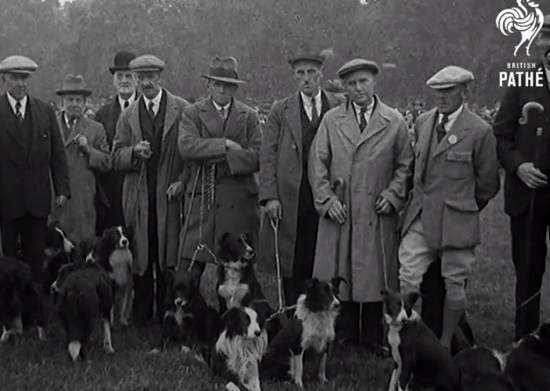 Handlers and Dogs from the First International Sheepdog Trial 1931