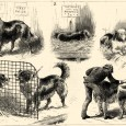 """FromAnecdotes of Dogsby Edward Jesse, Esq., 1858 The Colley Or Shepherd's Dog:a bitch having pupped deposits her young in the hills, and afterwards fetches them home  """"The late Mr. […]"""