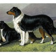 FromAnecdotes of Dogsby Edward Jesse, Esq., 1858 The Colley Or Shepherd's Dog:a sheep-dog dies of starvation whilst tending his charge The following anecdote is related by Captain Brown:— A shepherd […]