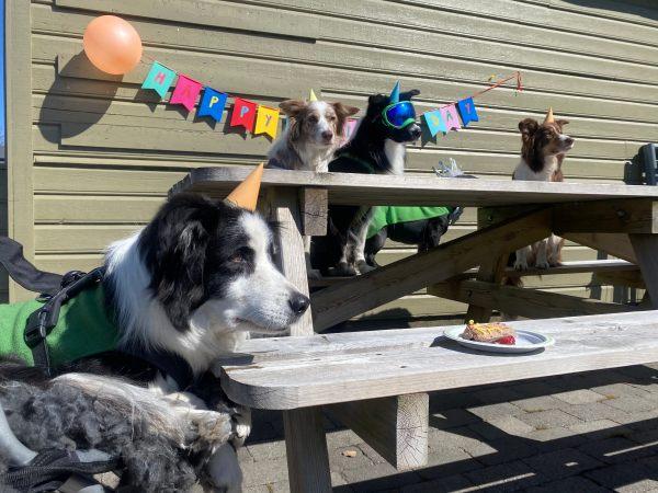 bella senior dog birthday party