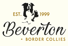Beverton Border Collies