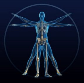 facts-about-the-human-body