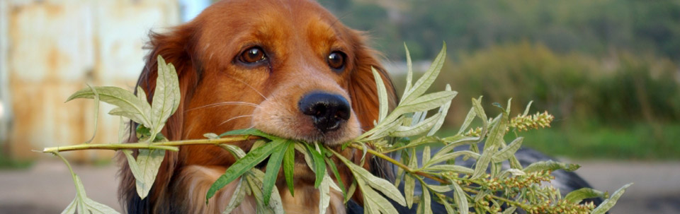 dog chewing plant