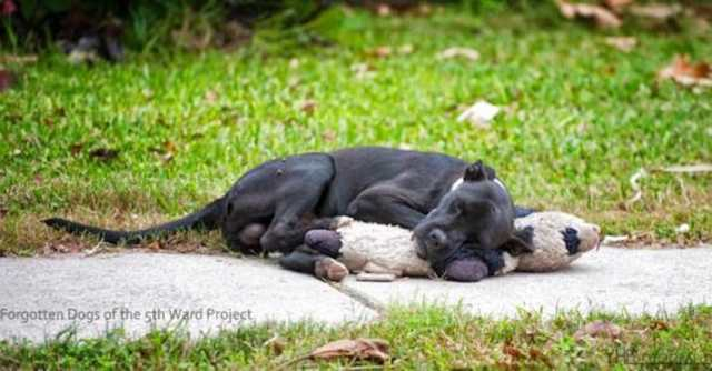 Abandoned dog lies on sidewalk hugging stuffed animal for comfort