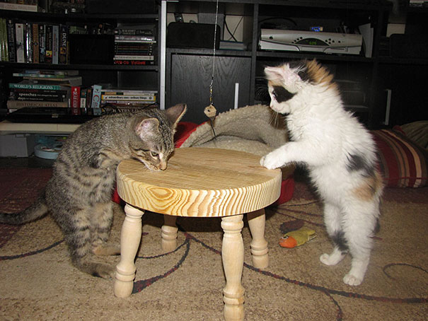 mercury-two-legged-kitten-21