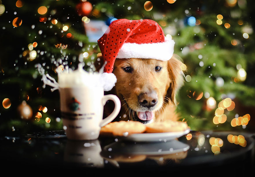 dog-photography-chuppy-golden-retriever-jessica-trinh-11