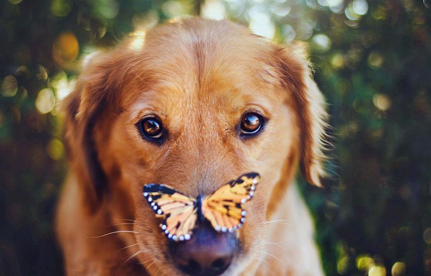 dog-photography-chuppy-golden-retriever-jessica-trinh-13