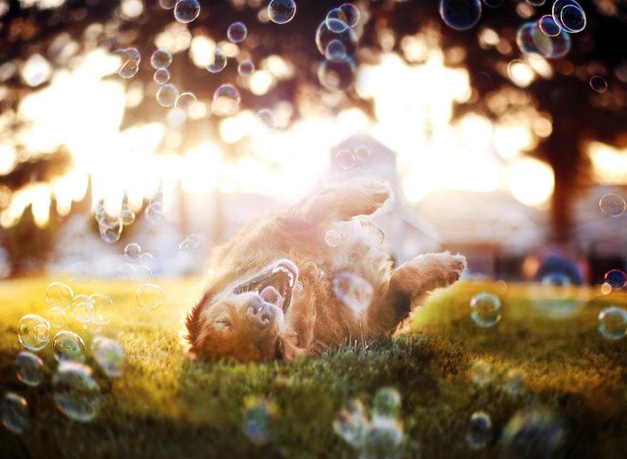 dog-photography-chuppy-golden-retriever-jessica-trinh-5
