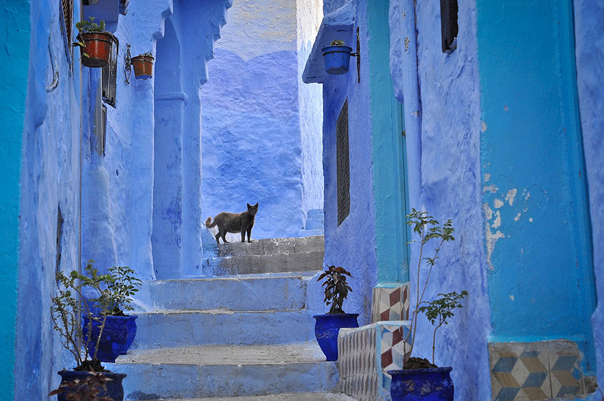 blue-streets-of-chefchaouen-morocco-3