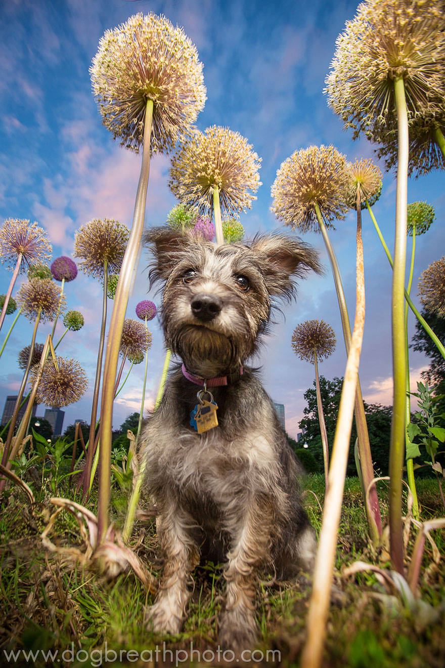 dogs-dog-breath-photography-kaylee-greer-43