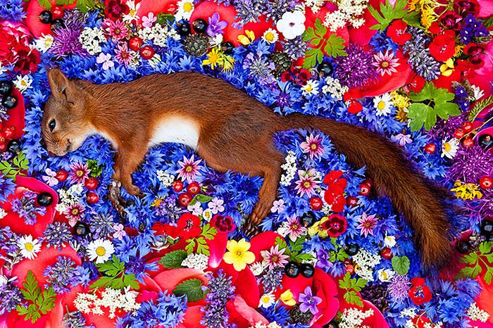 honoring-dead-animals-natura-morte-marina-ionowa-gribina-6