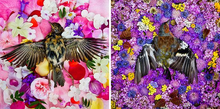 honoring-dead-animals-natura-morte-marina-ionowa-gribina-8