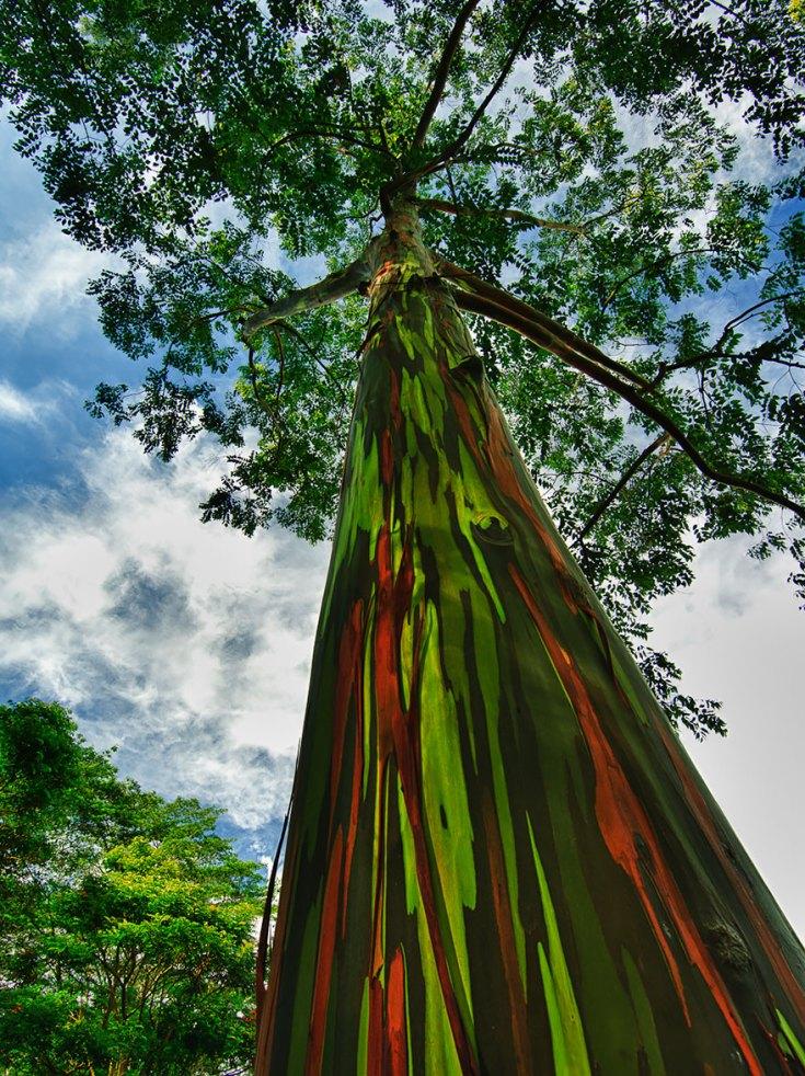 amazing-trees-19-1