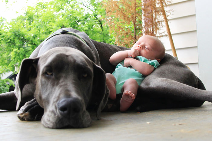 cute-big-dogs-and-babies-12