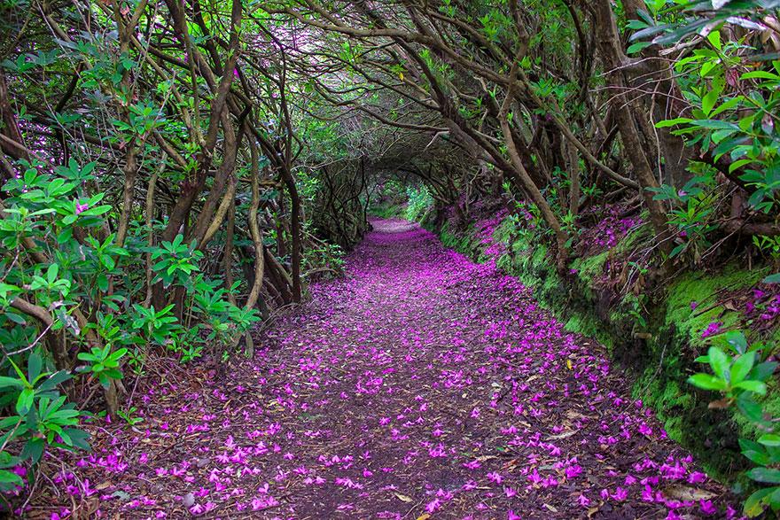 amazing-paths-21