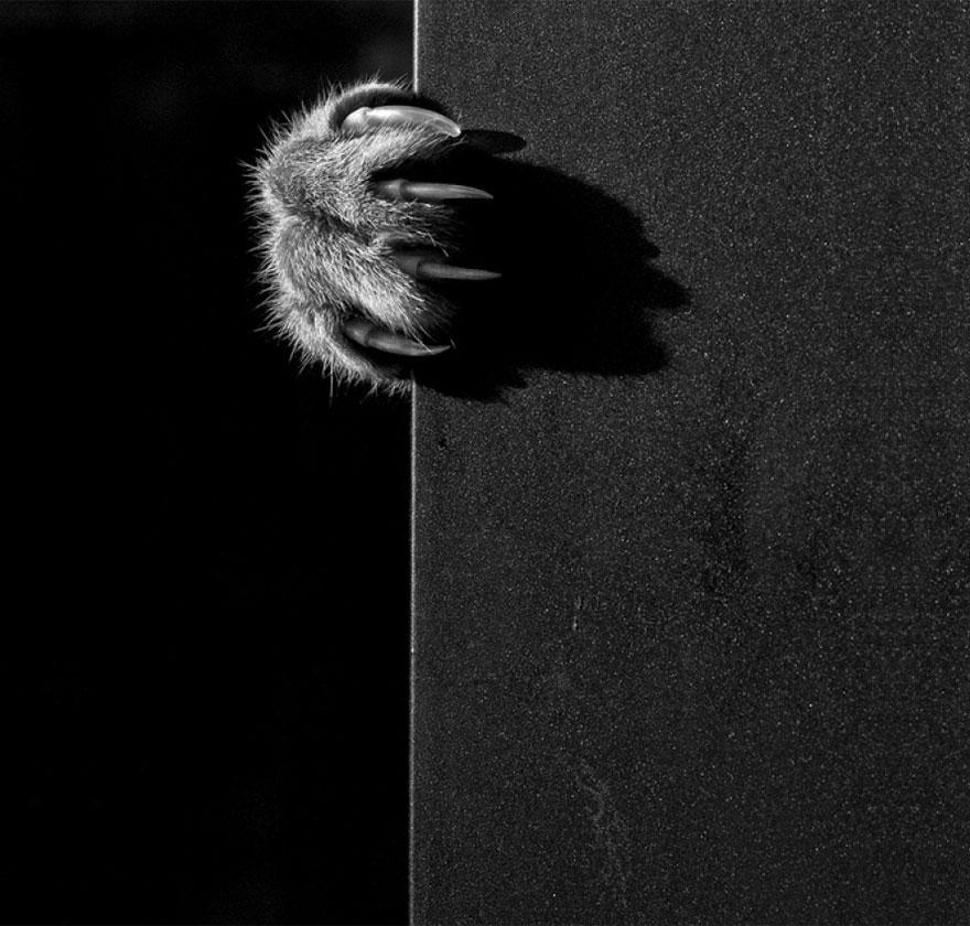 gato-preto-e-branco-fotografia-28