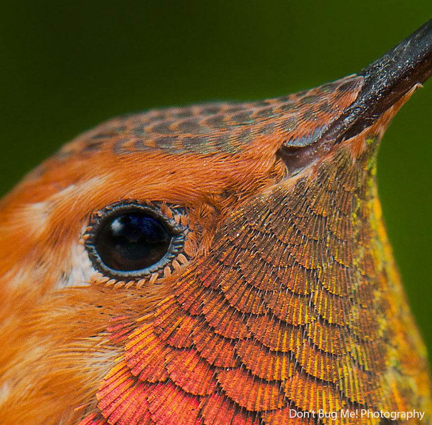 cute-beautiful-hummingbird-photography-111