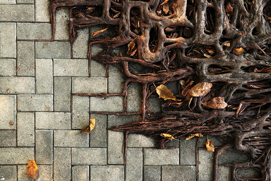 flower-tree-growing-concrete-pavement-36