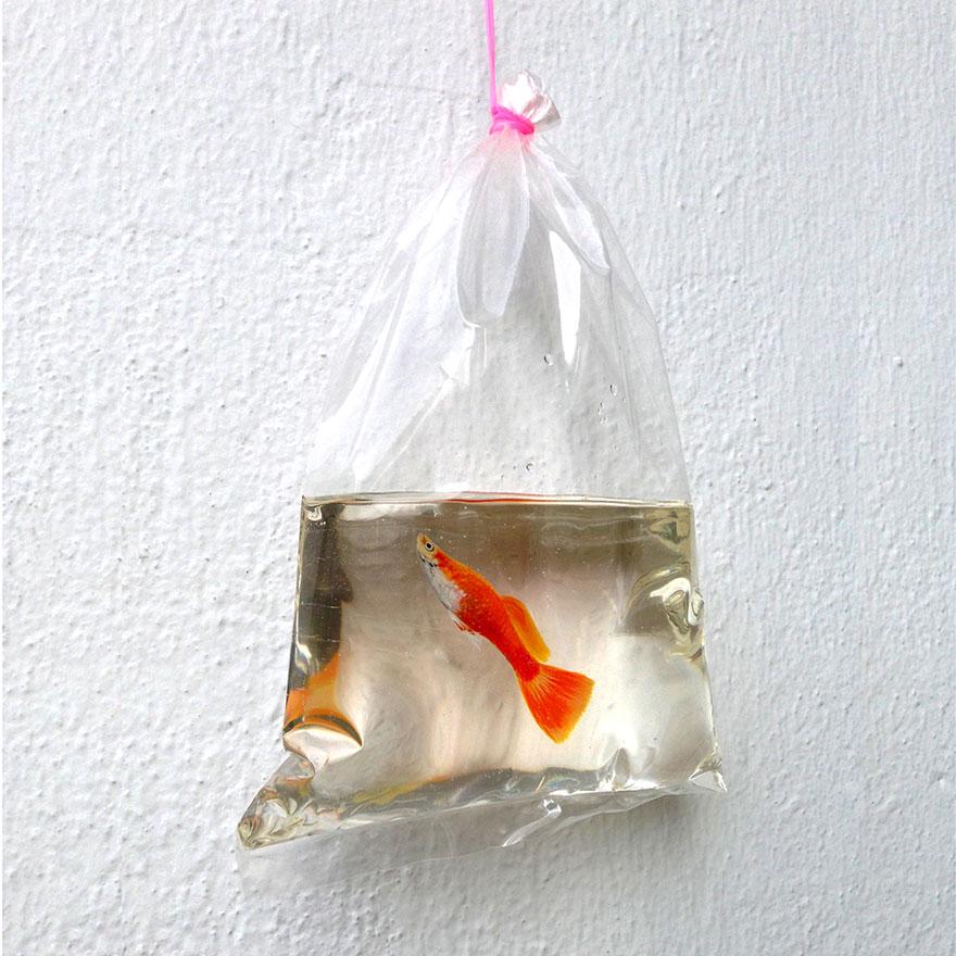 realistic-3d-sea-animals-resin-keng-lye-9
