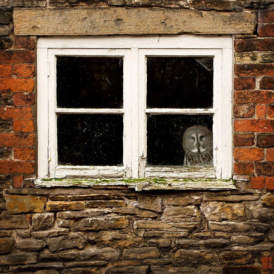 animals-looking-through-the-window-5