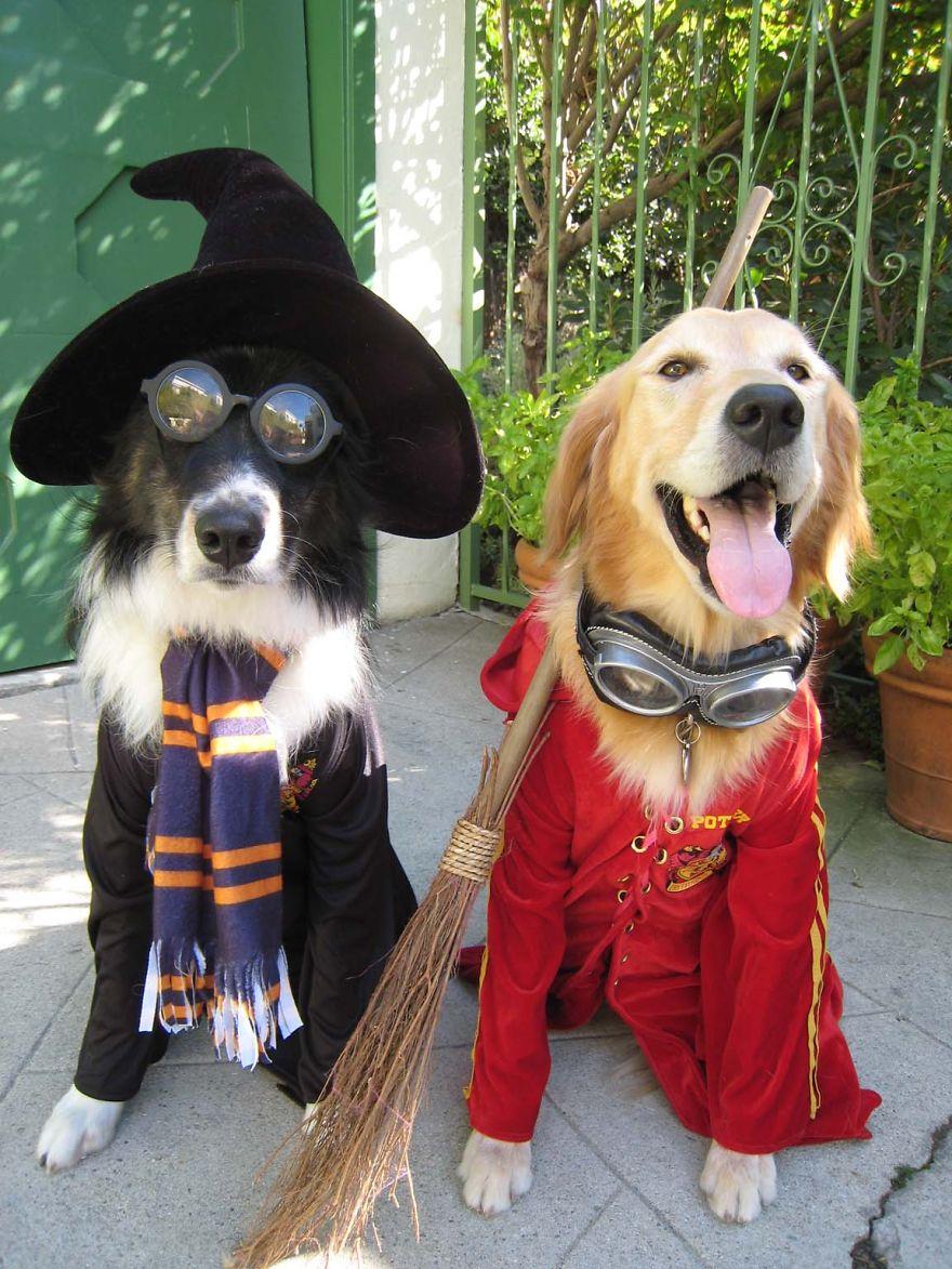 Harry Potter Dogs