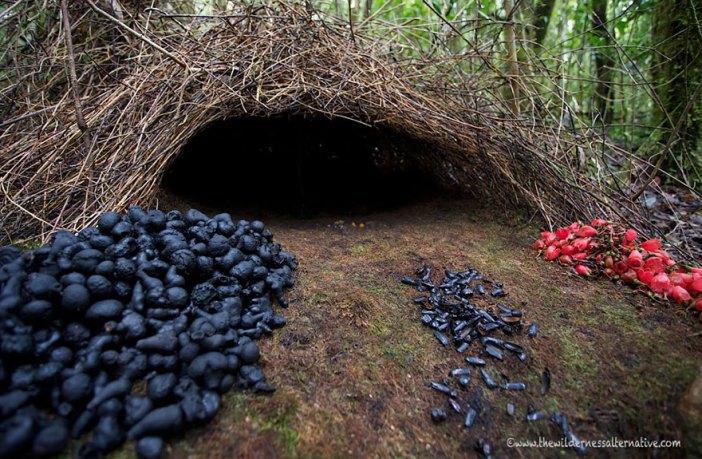 animal-architecture-nests-4-3