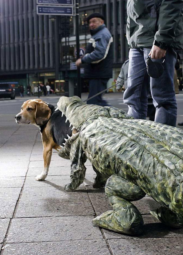 Dog Being Eaten By A Crocodile