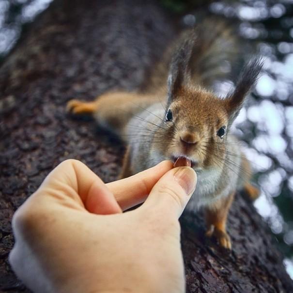 fotos-alimentando-animales-salvajes-finlandia-konsta-punkka (1)