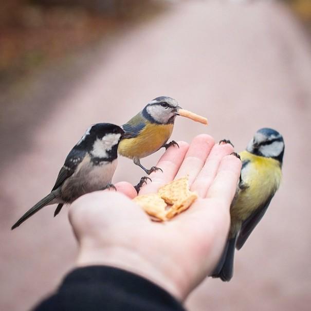 fotos-alimentando-animales-salvajes-finlandia-konsta-punkka (12)