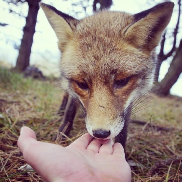 fotos-alimentando-animales-salvajes-finlandia-konsta-punkka (2)
