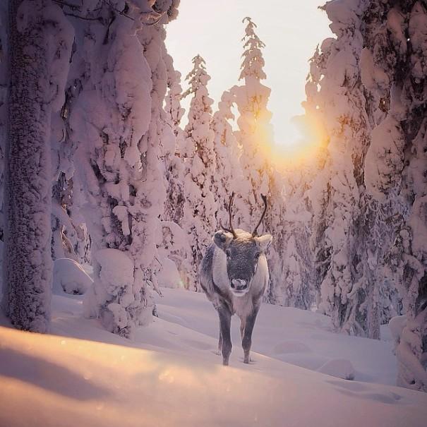 fotos-alimentando-animales-salvajes-finlandia-konsta-punkka (20)