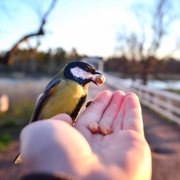 fotos-alimentando-animales-salvajes-finlandia-konsta-punkka (3)