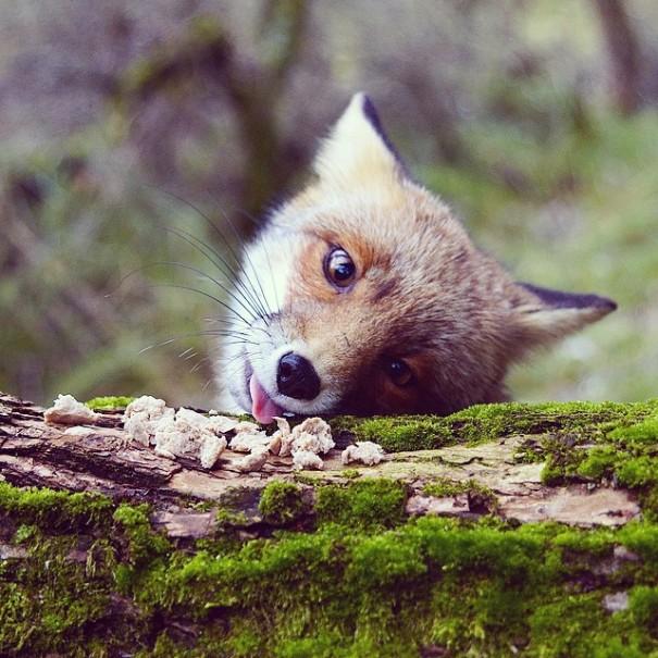 fotos-alimentando-animales-salvajes-finlandia-konsta-punkka (6)