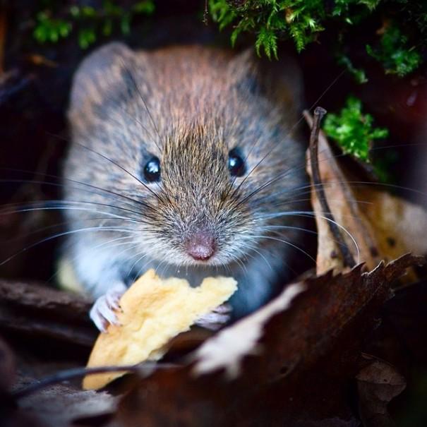 fotos-alimentando-animales-salvajes-finlandia-konsta-punkka (9)