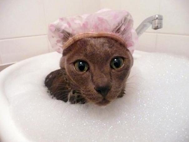 14 Gatos a los que les gusta bañarse más que a ti - Hoy Frases - Lo ... c427cd17341