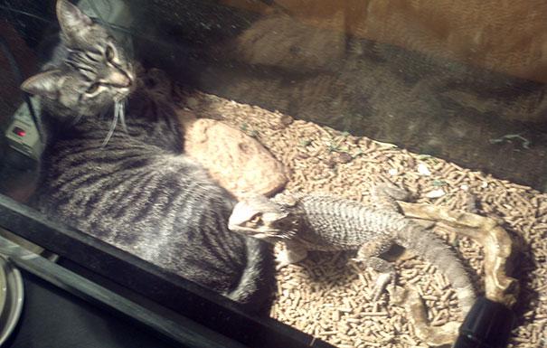 animales-que-aman-al-calor (12)