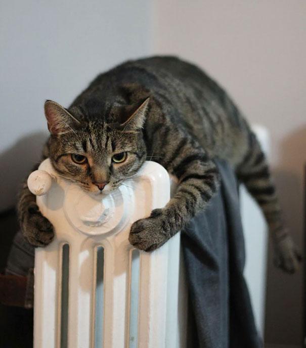 animales-que-aman-al-calor (19)
