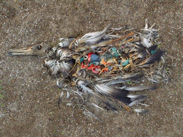 contaminacion-planeta-sobredesarrollo-sobrepoblacion-exceso (16)