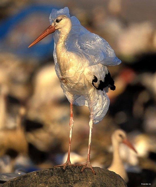 contaminacion-problemas-medioambientales (14)